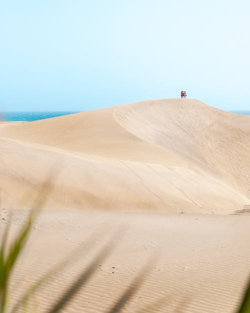 Scenery view of blue sky above endless ocean and grass in solitude sandy dune