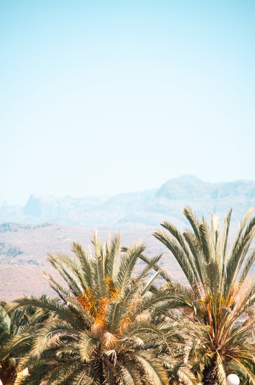 View of light blue sky and green leaf blades of palm in empty desert near mountains