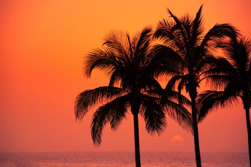 Silhouettes of tropical palm trees growing on shore of peaceful ocean against picturesque colorful sunset sky