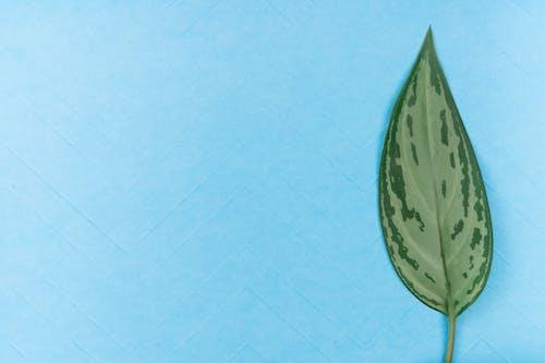 Бесплатное стоковое фото с flat lay, вид сверху, зеленый лист