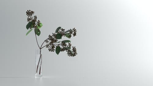 Vase with Syringa flower branch on white table