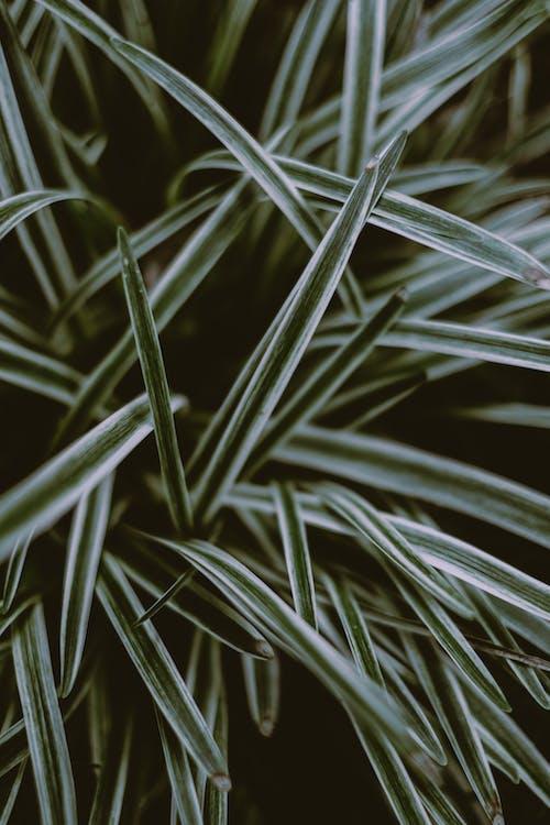 Foto d'estoc gratuïta de a l'aire lliure, arbust, bosc