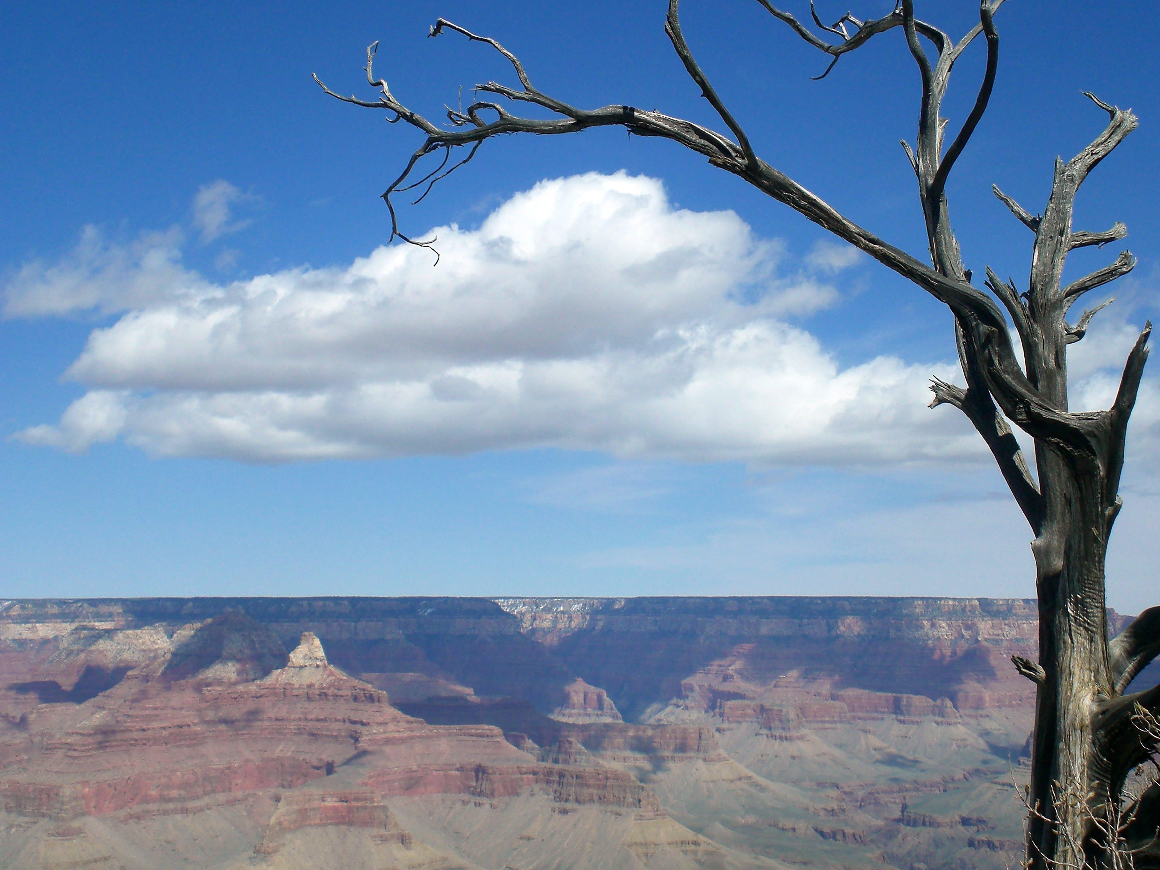 Free stock photo of arizona, blue, desert, grand canyon