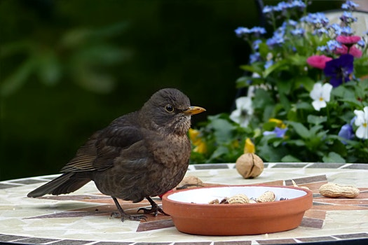 Free stock photo of bird, garden, foraging, throttle