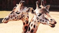 animal, blur, zoo