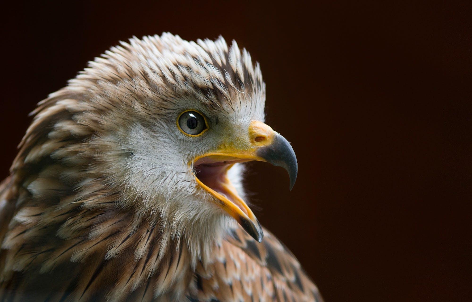 animal, animal world, avian