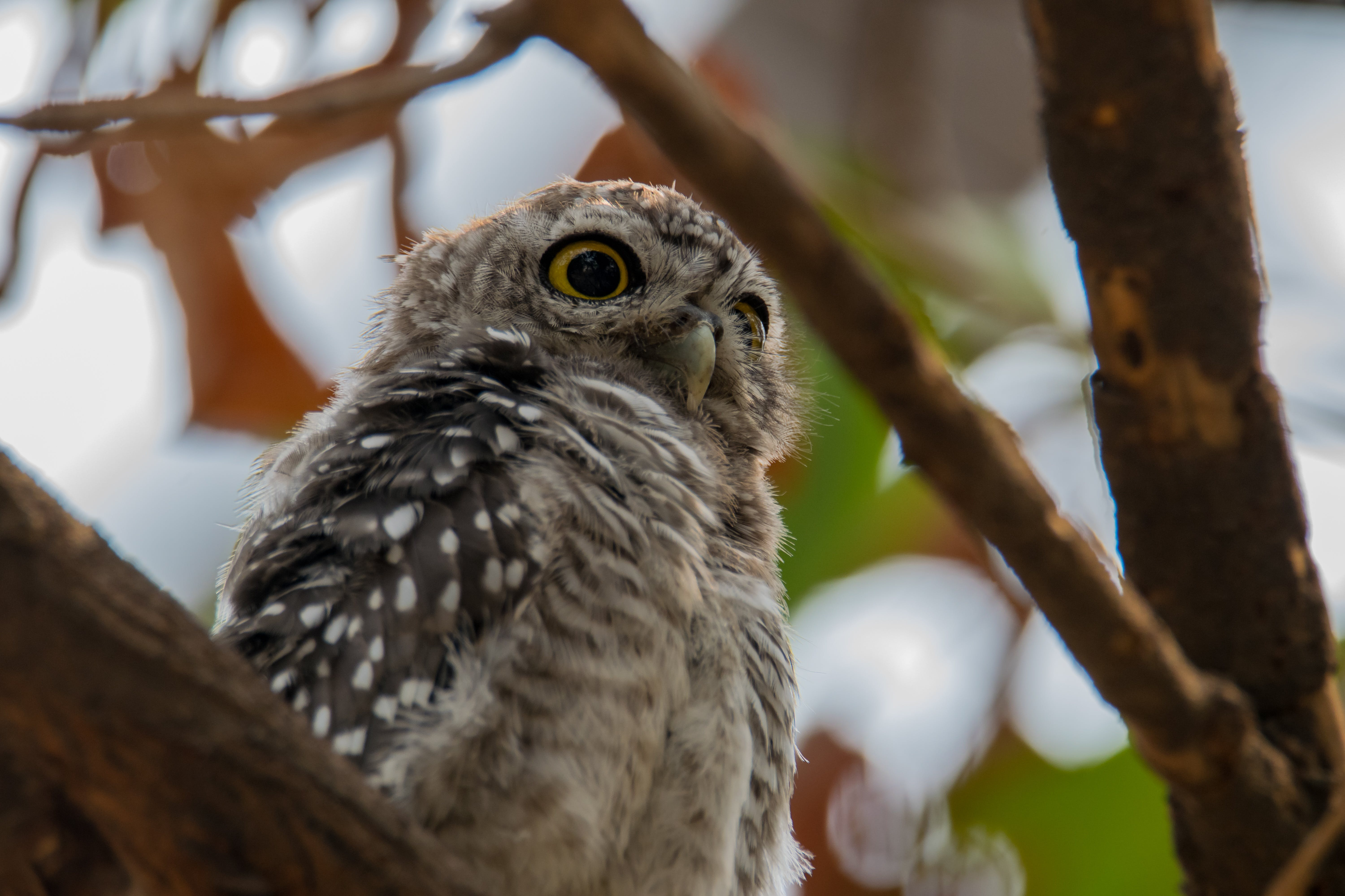 Gray and Black Owl Standing on Branch of Tree
