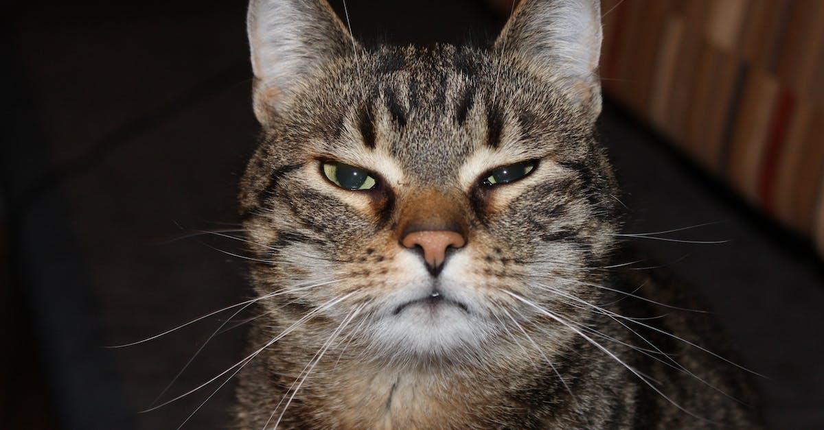 Прикольные кошачьи морды картинки, красиво нарисовать открытку
