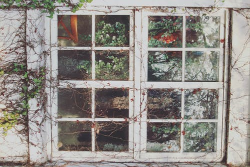 Weathered house window with growing plants