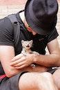 pet, sweet, kitten