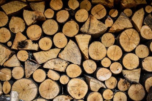 Free stock photo of brown, firewood, log