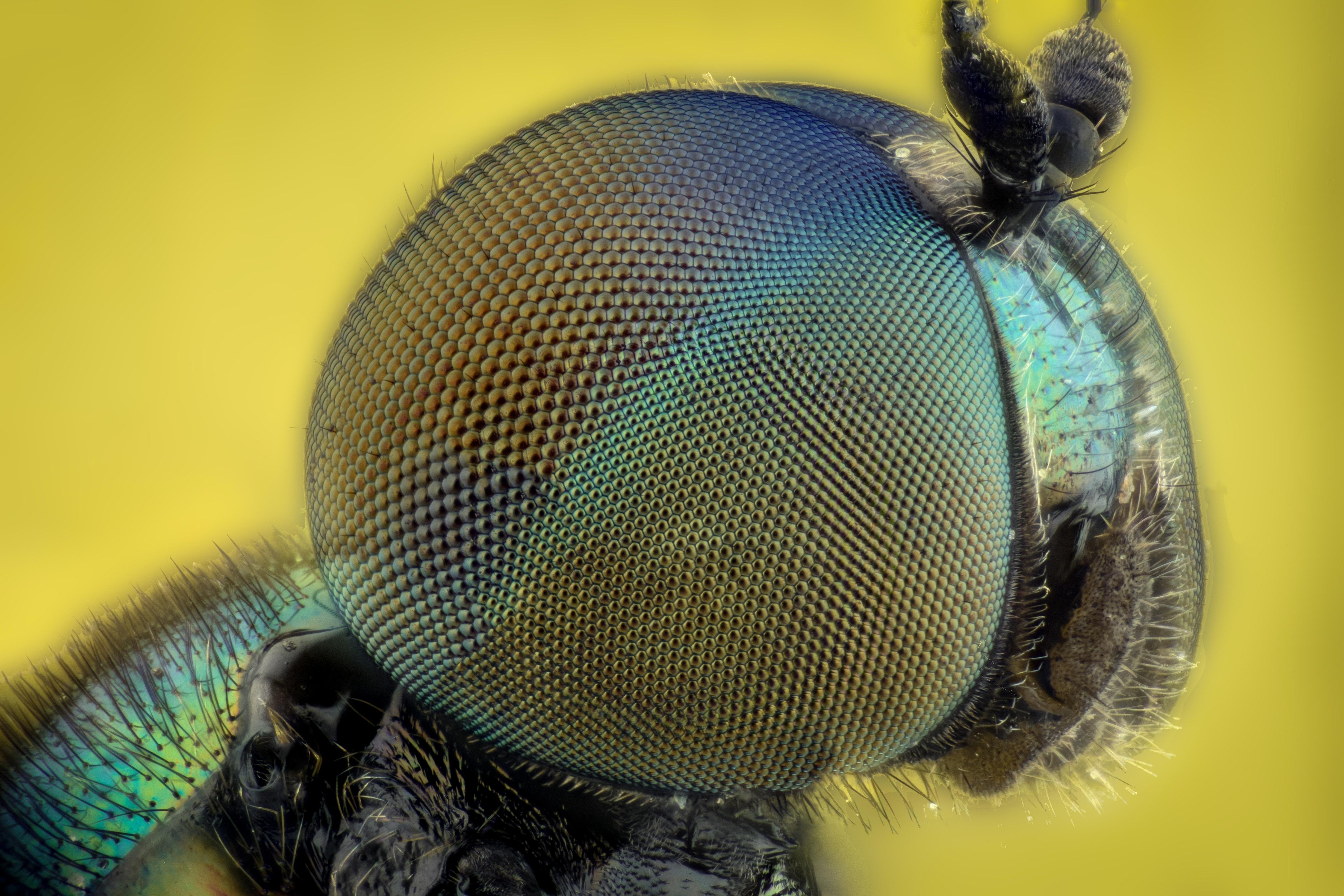 Free Stock Photo Of Bug Colors Eyes