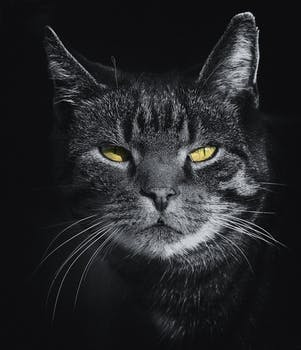 1000 Amazing Angry Cat Photos Pexels Free Stock