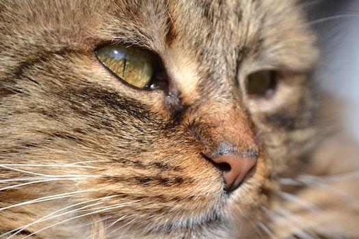 Free stock photo of animal, grey, cat, domestic cat