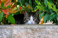 wall, bush, pet
