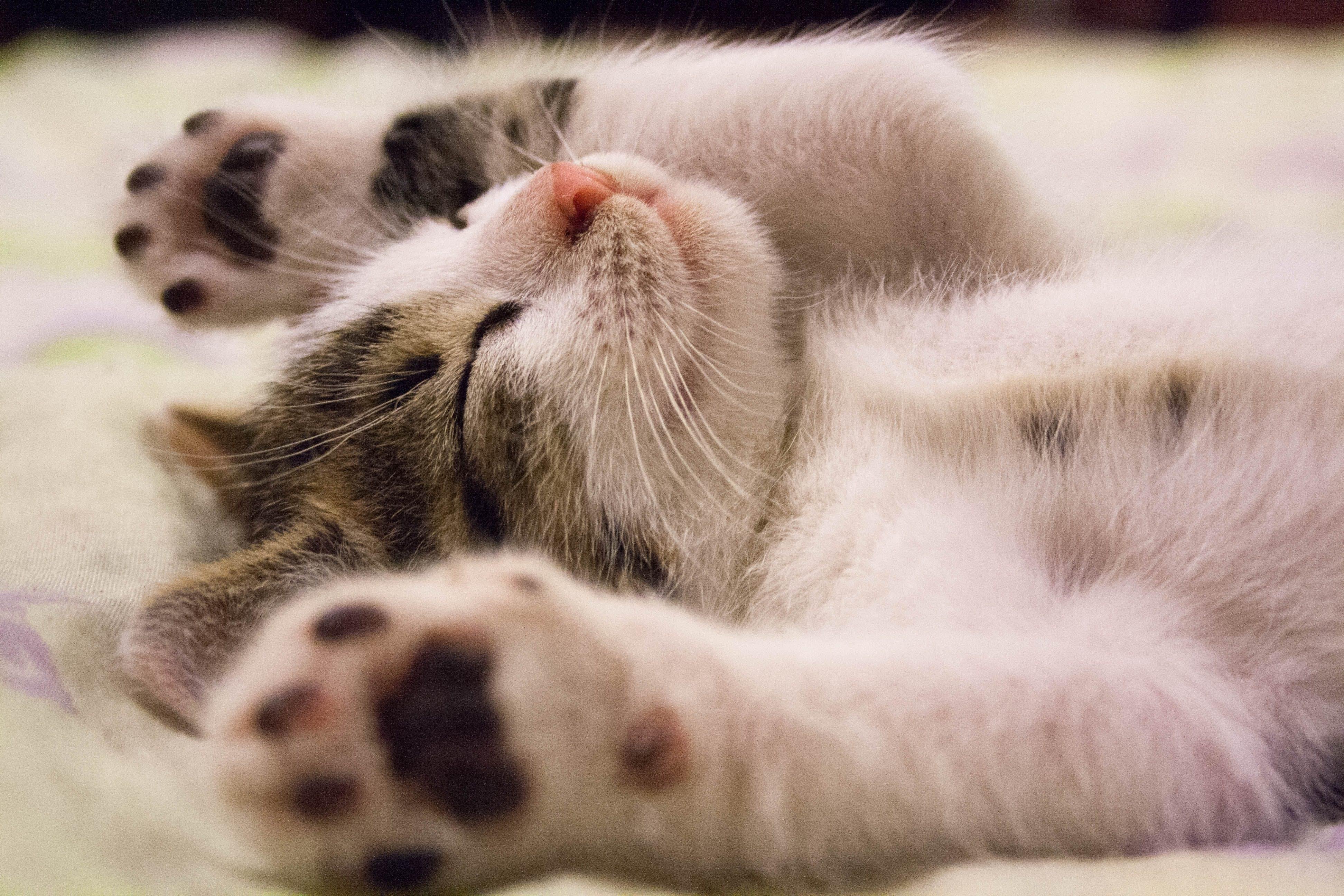 Los gatos y la siesta