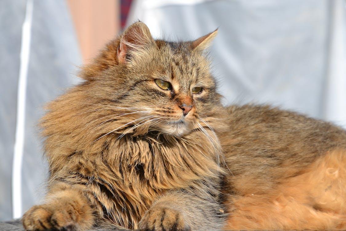 animal, cat, domestic cat