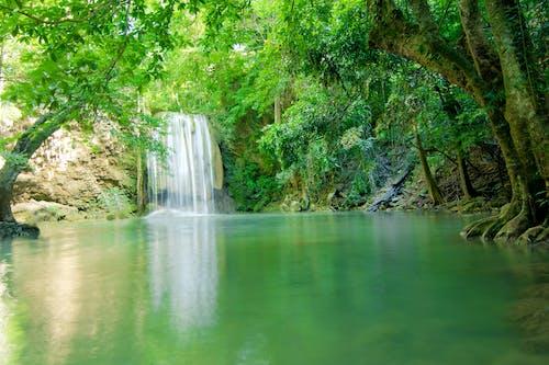 Fotos de stock gratuitas de agua, árbol, arroyo, bonito