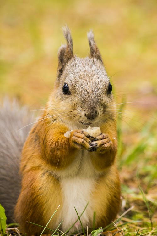 Δωρεάν στοκ φωτογραφιών με άγρια φύση, άγριος, αξιολάτρευτος, απαλός