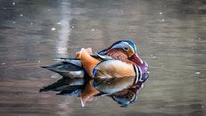 nature, bird, water
