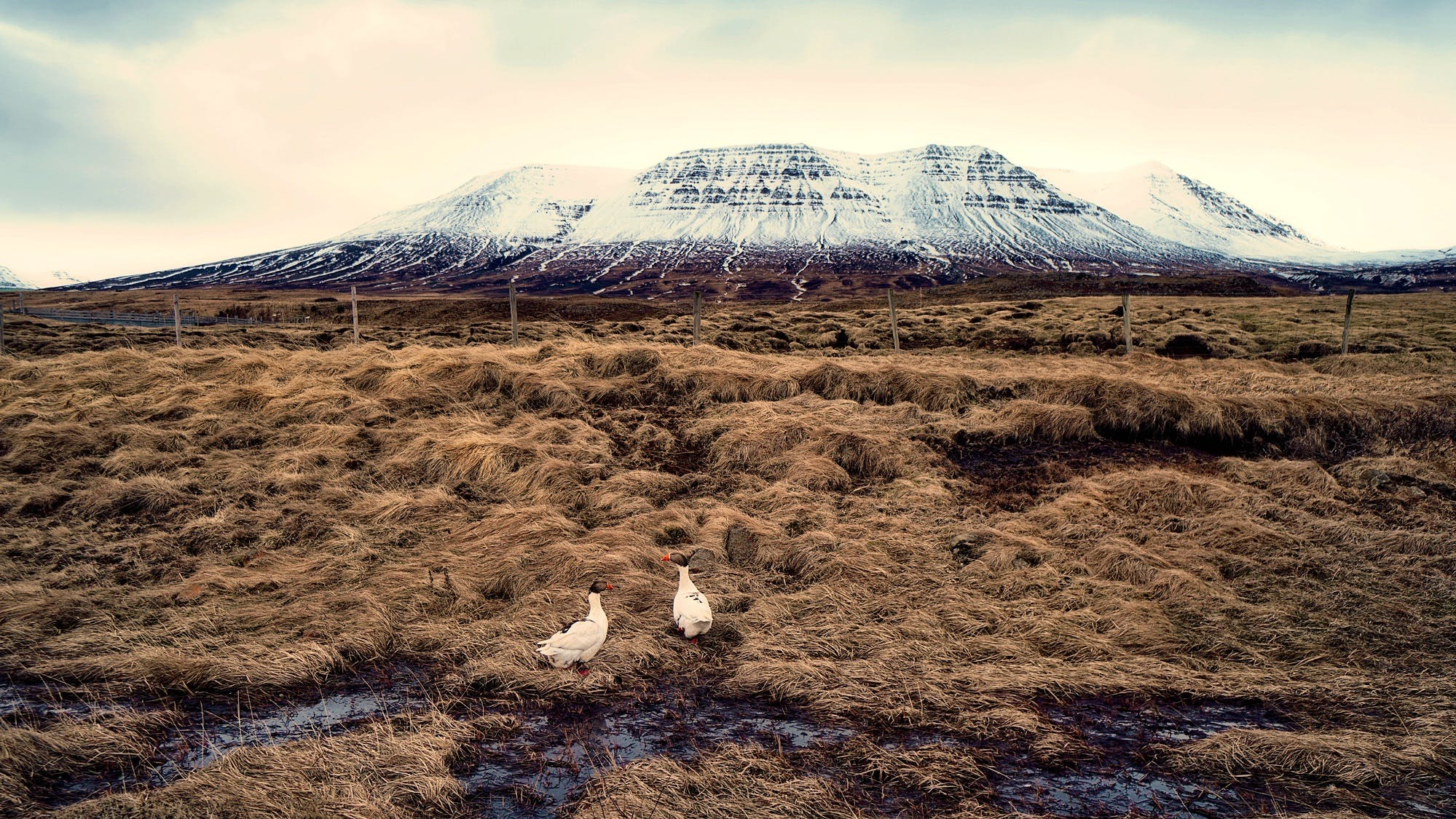 Free stock photo of iceland, snow, landscape, mountains