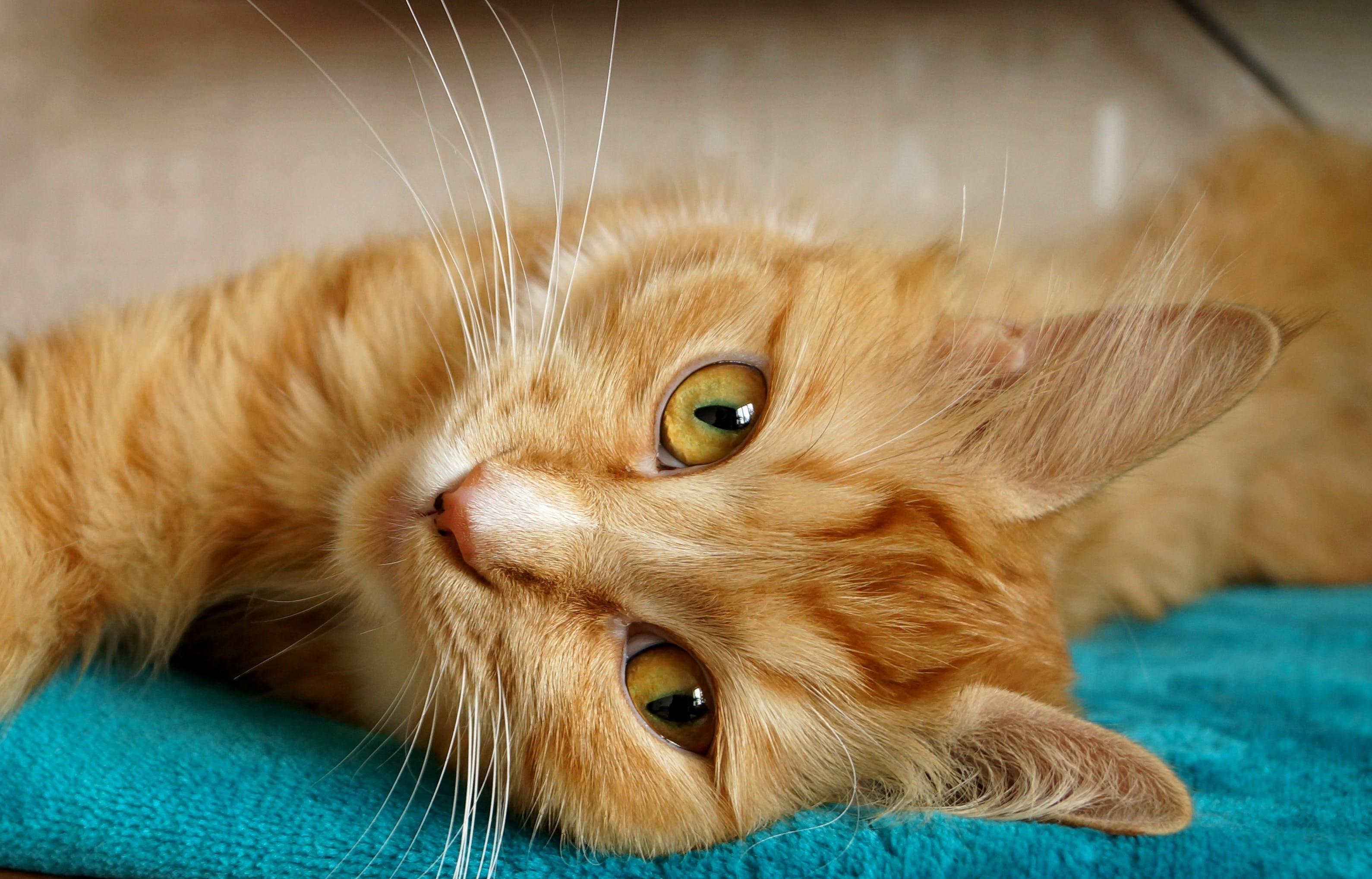 Orange Tabby Cat Lying on Green Cloth