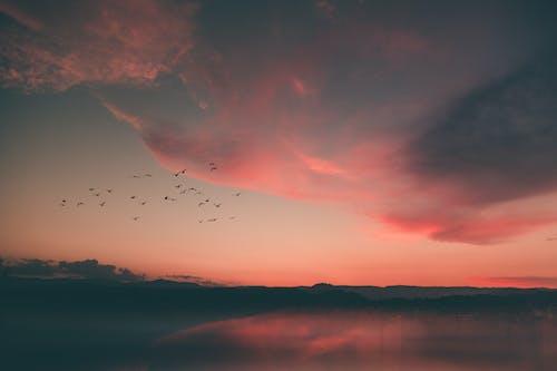 Free stock photo of alba, cielo al tramonto, lago