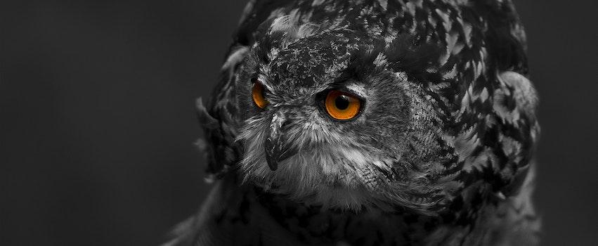 Kostenloses Stock Foto zu schwarz und weiß, vogel, tier, augen