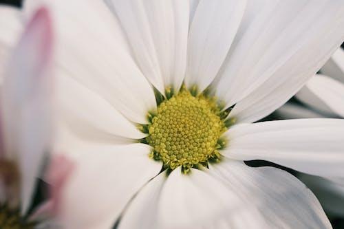 Gratis stockfoto met biologisch, bloeien, bloem, bloemachtig
