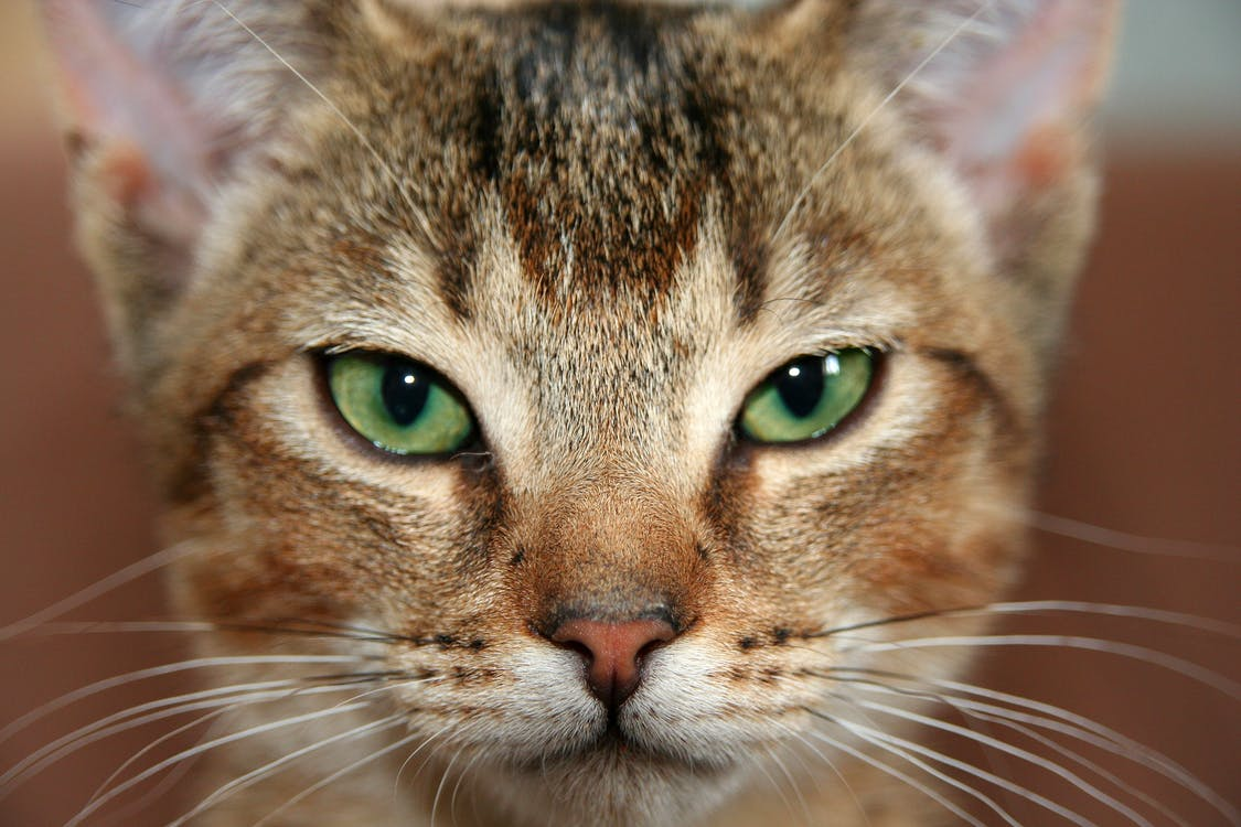 Photography of Cat