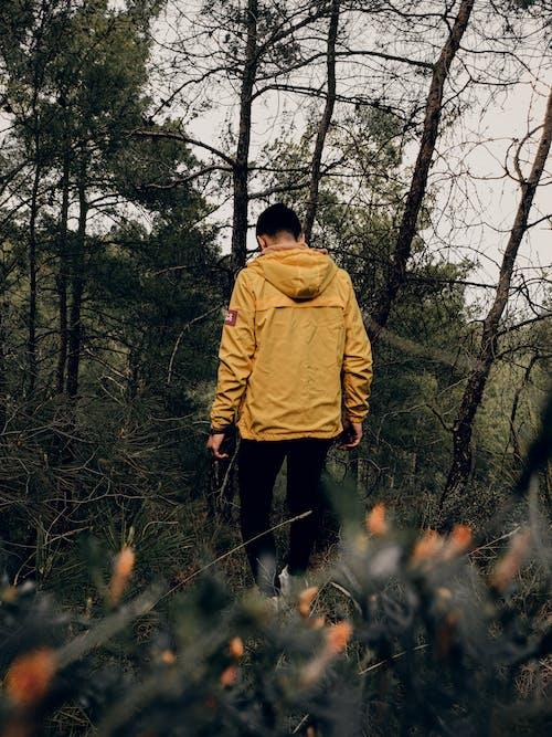 Ingyenes stockfotó aktivitás, domb, egyedül, erdő témában