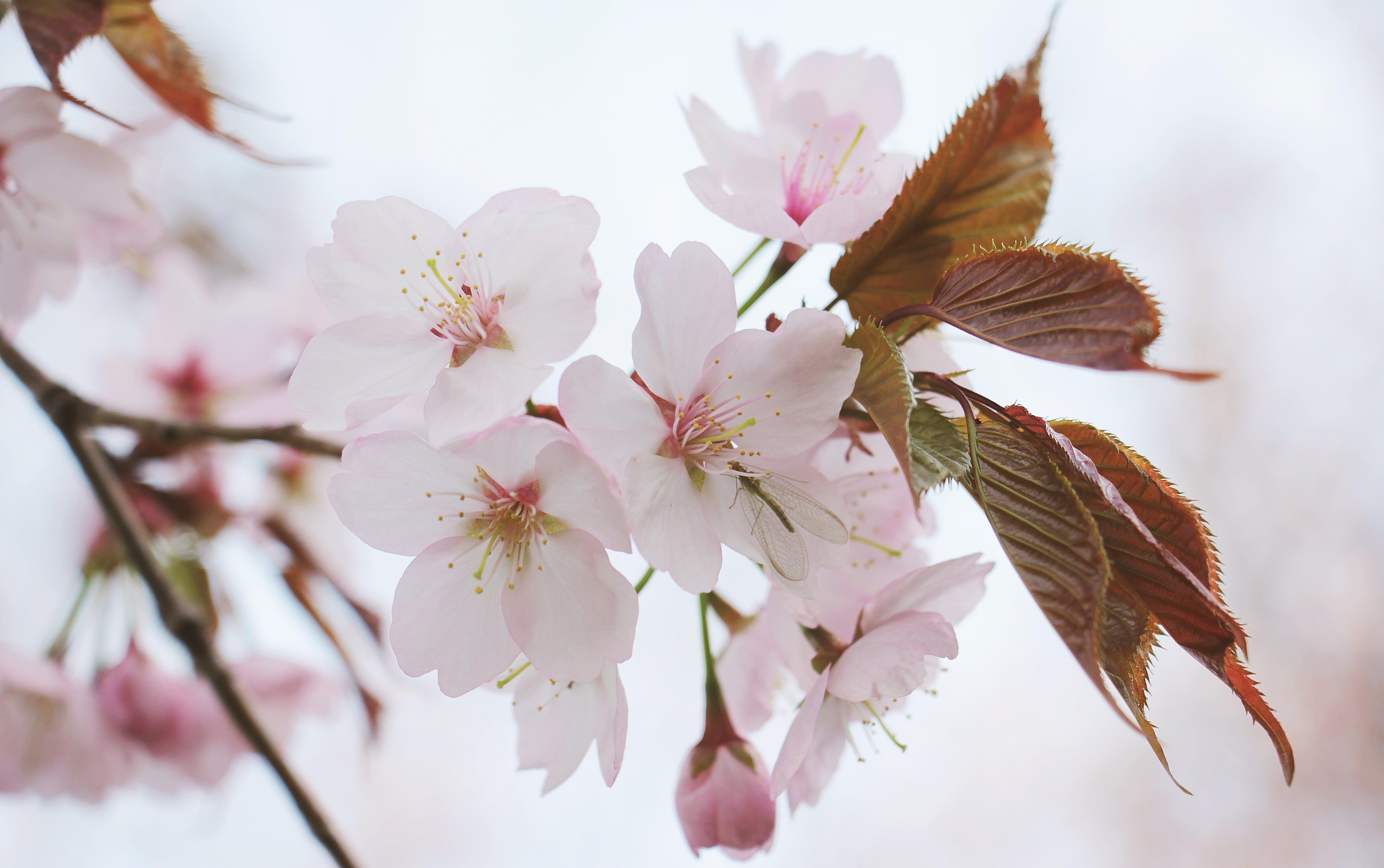 Foto d'estoc gratuïta de branca, brot, color, creixement