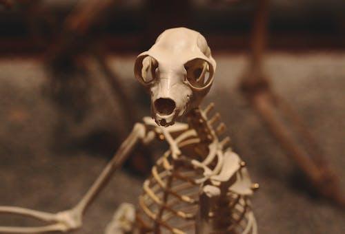 Shallow Focus of White Skeleton Figurine