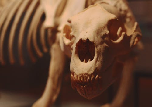 Close-Up View of Skeleton Model