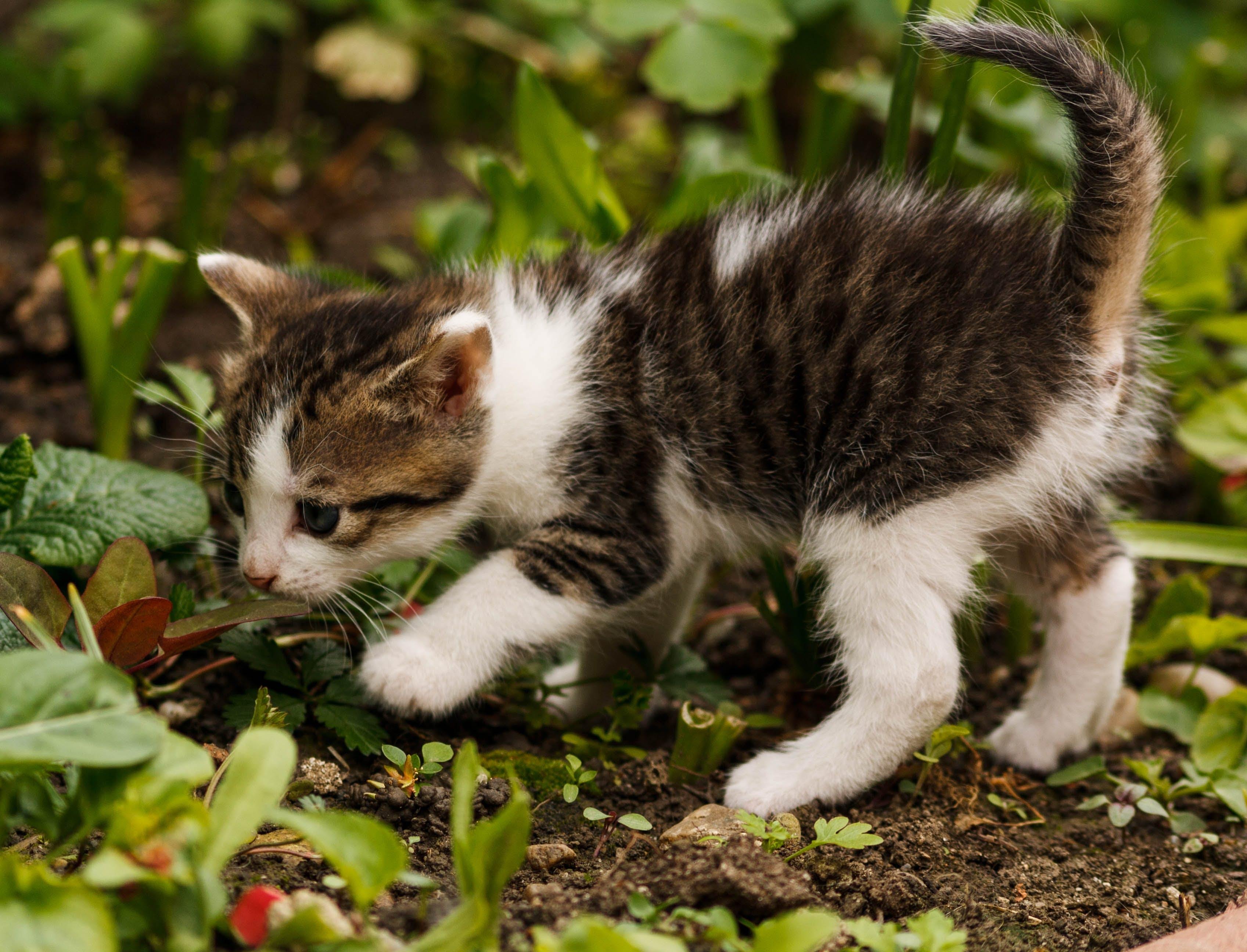 Free stock photo of animal, cat, friendship, kitty