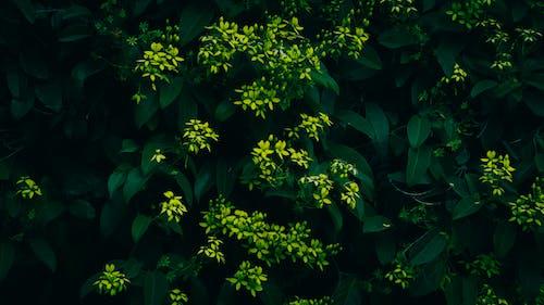Бесплатное стоковое фото с зеленые листья