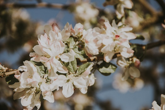 Free stock photo of flowers, spring, white