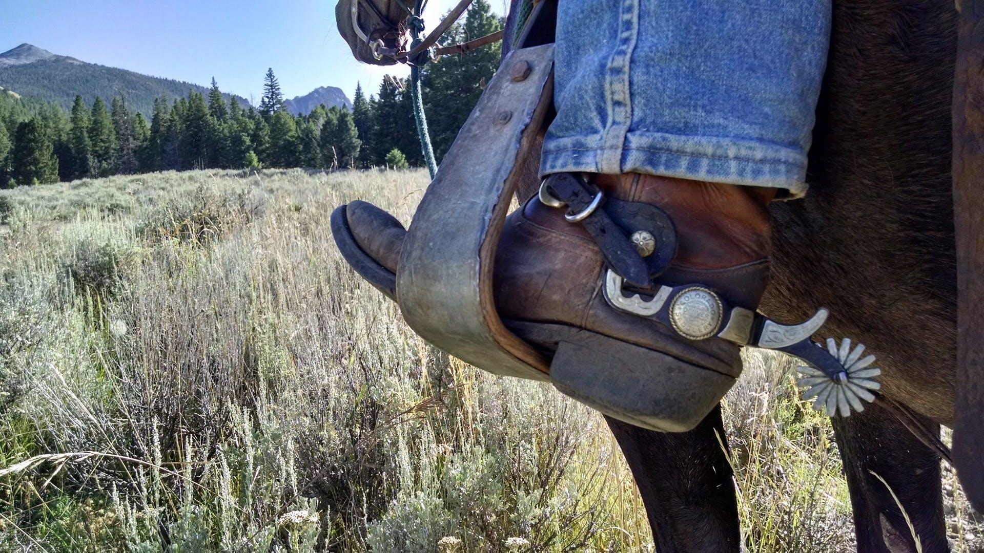 boots, conifers, denim