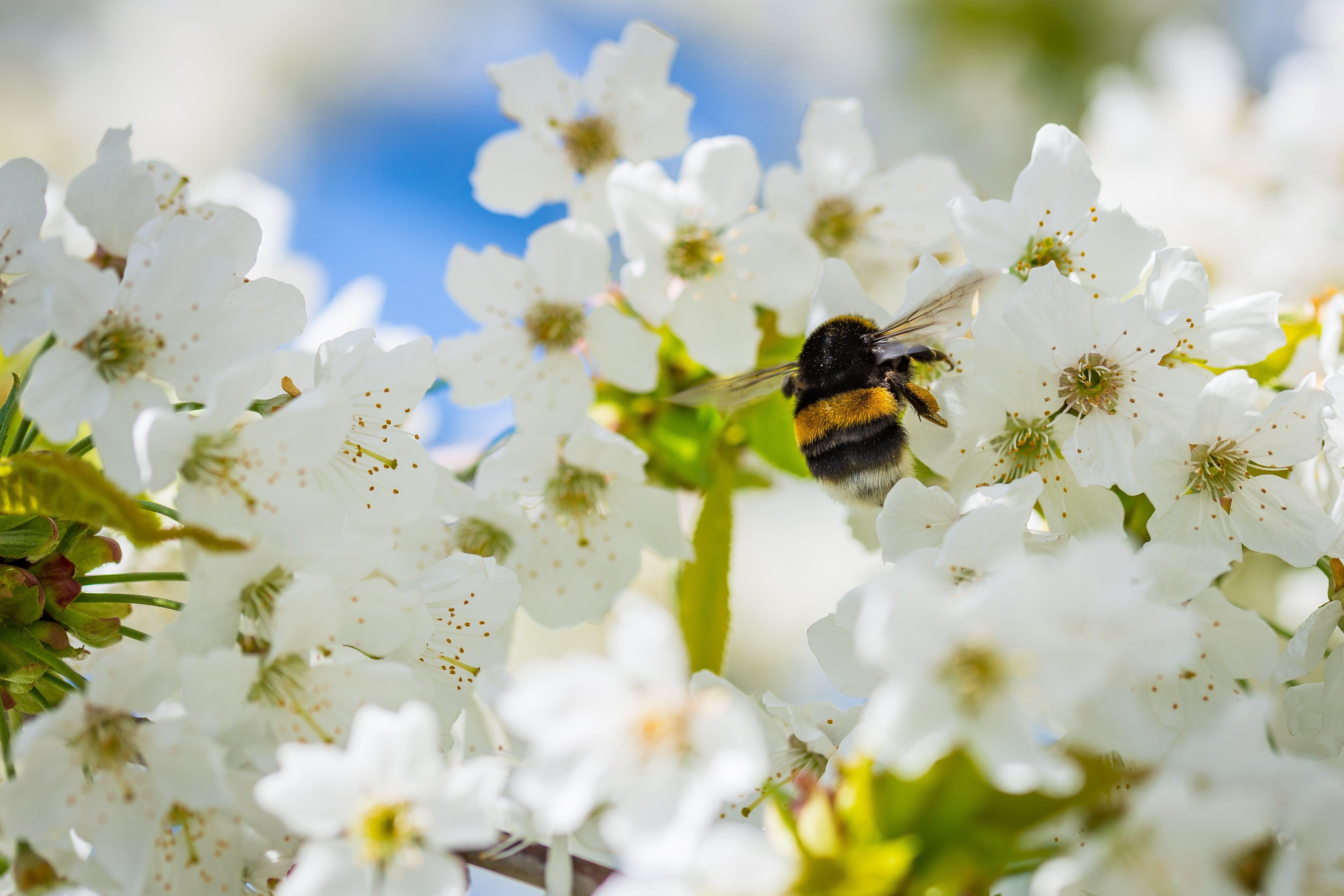 animal, bee, bloom
