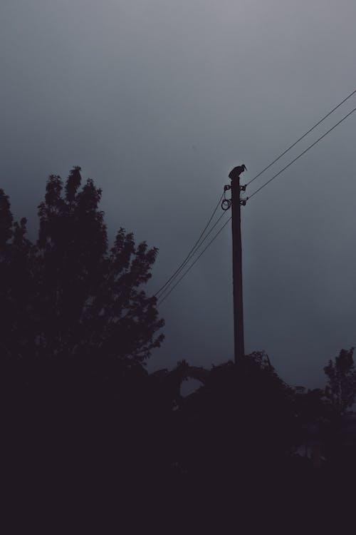 Foto d'estoc gratuïta de alba, arbre, boira, capvespre
