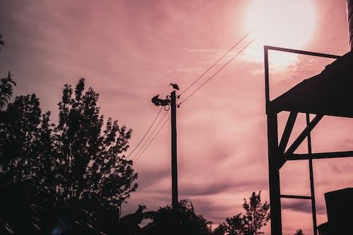 Foto d'estoc gratuïta de a l'aire lliure, alba, capvespre, carrer