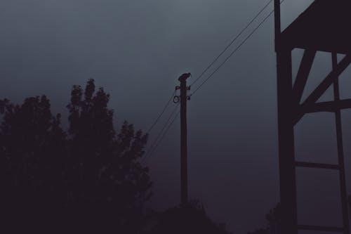 Foto d'estoc gratuïta de alba, boira, capvespre, clareja