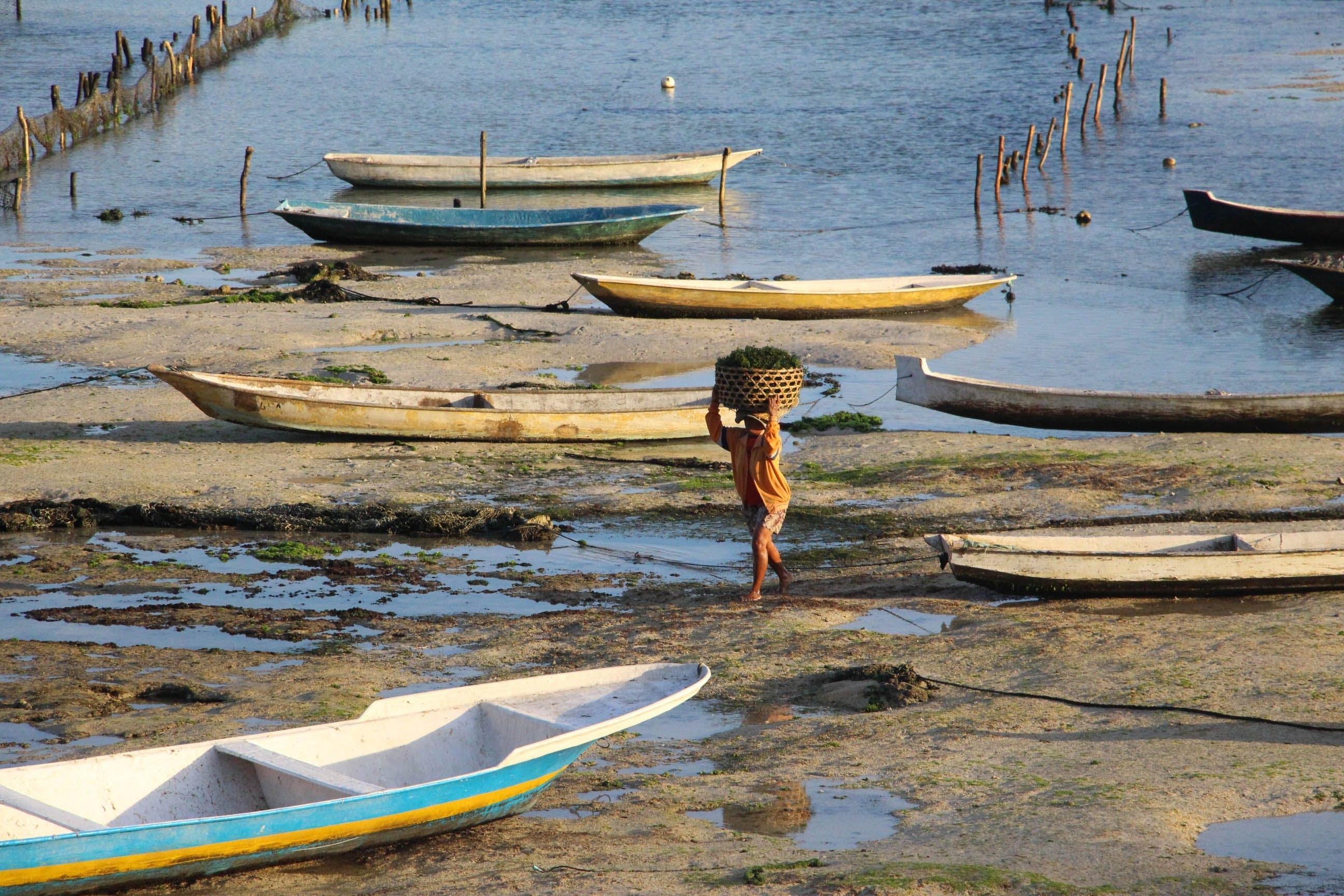 Free stock photo of sea, harvest, work, indonesia