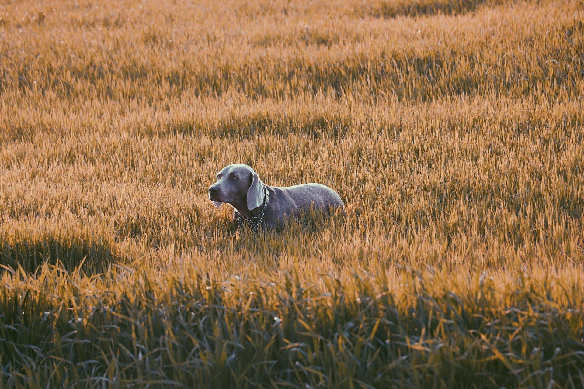 Free stock photo of adorable, animal, animal-photography, canine