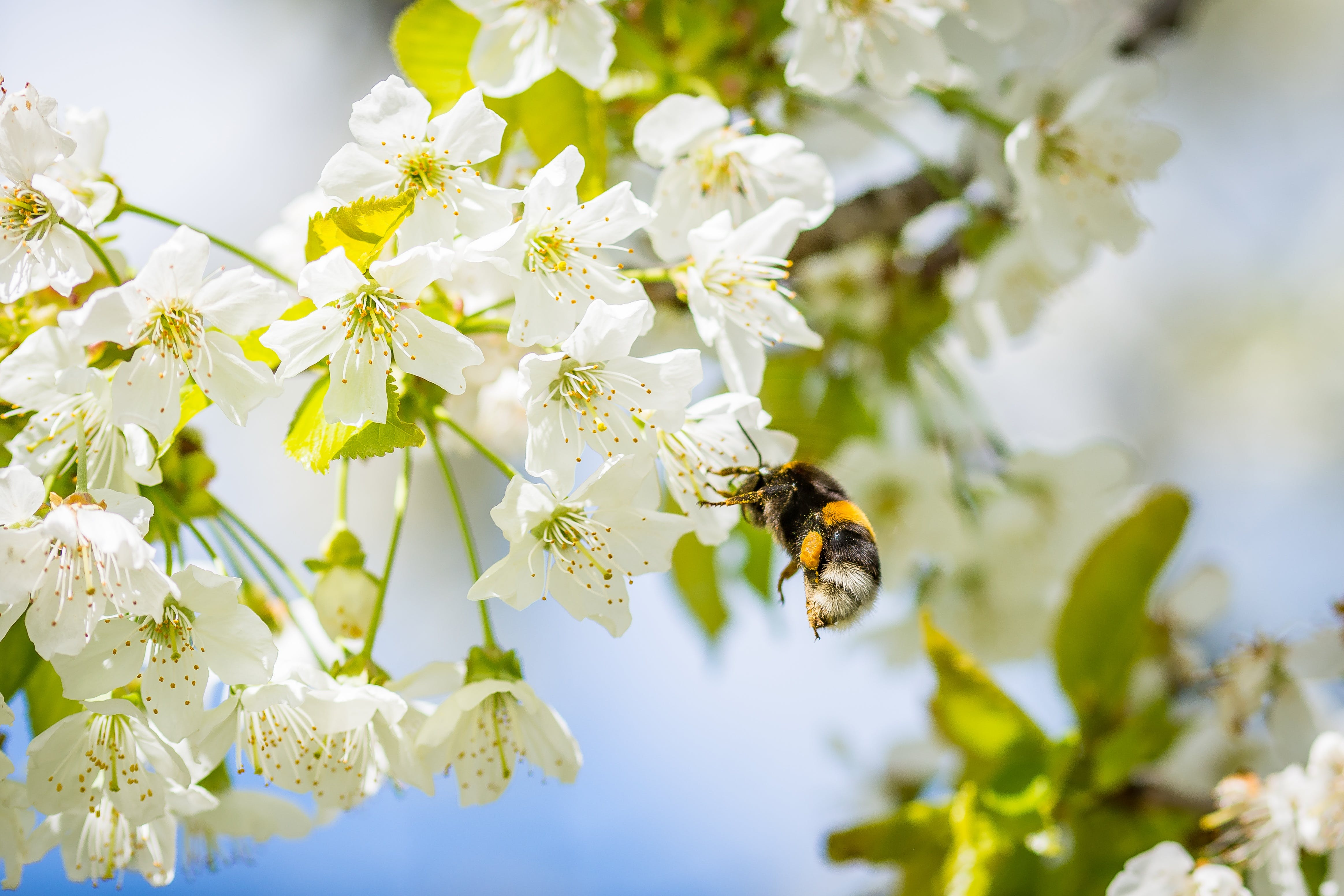 animal, beautiful, bee