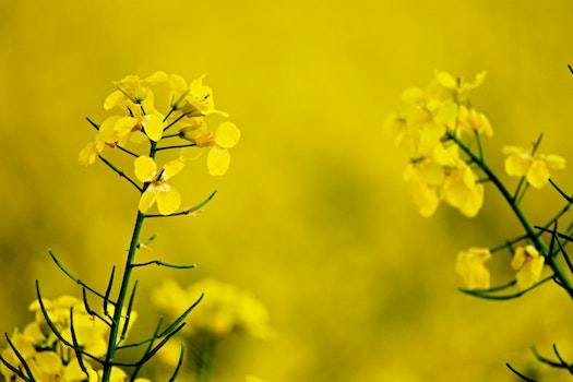 Free stock photo of nature, flowers, yellow, branches