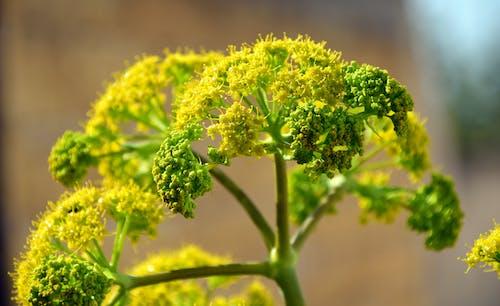 Foto stok gratis berbayang, berkembang, bunga-bunga, flora