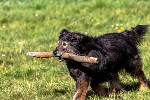 Dog with wooden stick in mouth