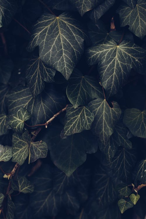 Green and Black Leaves in Close Up Photography