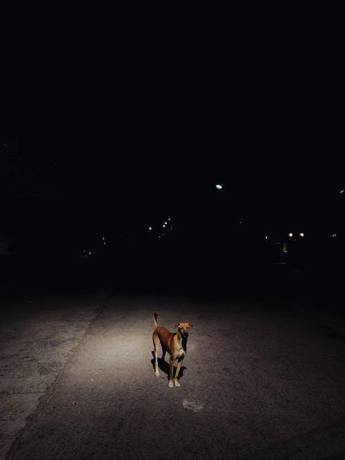 Základová fotografie zdarma na téma noc, pes, savec